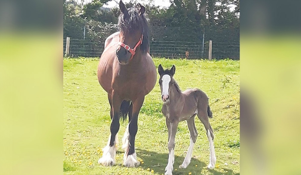 Rescued horse left to die in Clondalkin gives birth